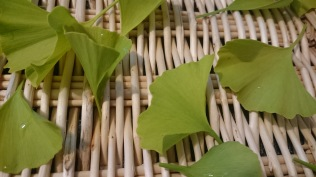 Drying Gingko