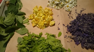 Mullein, Feverfew, Mock Orange & Lavender Drying