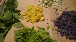 Mullein, Feverfew, Mock Orange & Lavender Drying