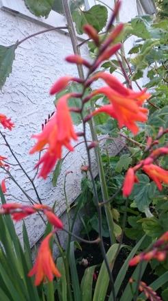 Renee's Oakland garden