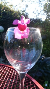 Snapdragon - Renee's Oakland Garden
