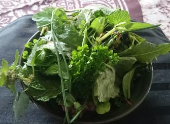 Yard Salad - March 27, '17