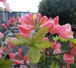 Renee's garden 014