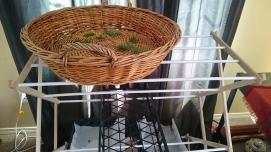 Flat basket