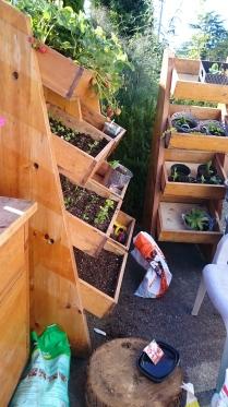 adding soil