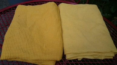 Fresh from the dye pot: left dyed from flowers, right from leaves