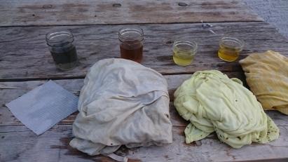 Backyard Plant Dyes