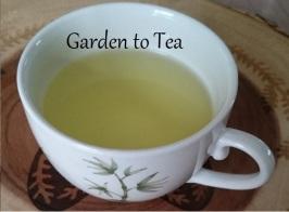 Backyard Tea's