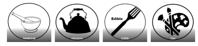 Edible, Medicinal, Dye